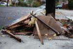 Debris can create a hazard to the side walks in the neighborhood.