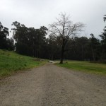 This path is located at nearby Mills College. People often run, bike, jog, or take long walks on this peaceful trail. I see this area as being a healthy jewel of this neighborhood that goes untapped. Katherine Brown - Oakland Voices.