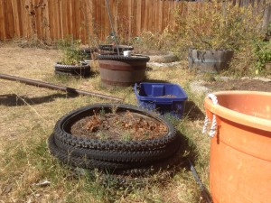 Old bicycle tires serve as backyard planter