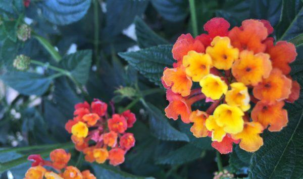 Flores flowering in gratitude